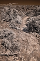 Path to Unique
