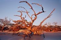Driftwood Dance