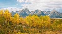 Teton Foliage
