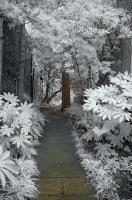 Path to Fruitless
