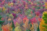 Foliage on Blue Mountain